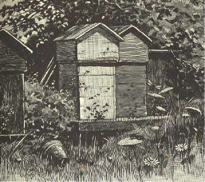 Three bee-hives; wooden boxes about two feet square and four feet high, with a sloped roof.